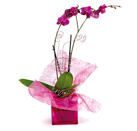 Orquídea en base cuadrada. Online 021