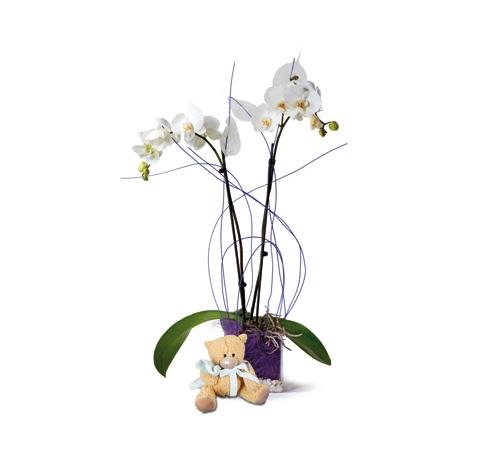 Orquídea  blanca con peluche. Online 022
