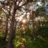 Ein Weg führt in den Uferwald bei Prora