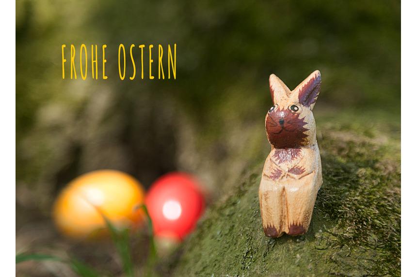 Osterhase hat bunte Eier versteckt bei Tageslicht