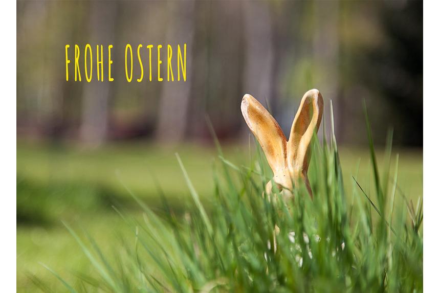 Osterhase versteckt sich im Gras bei Tageslicht