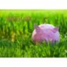 Neujahrskarte mit rosa Glücksschwein auf Wiese