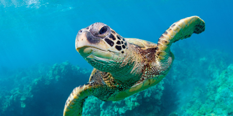 World sea turtle day 16th June