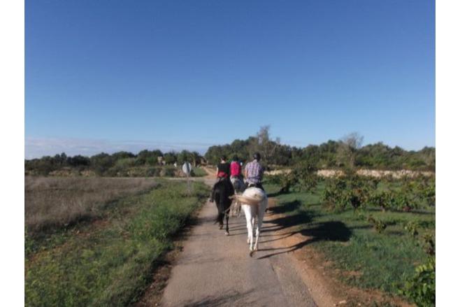 The Horse Riding Tourist Blog