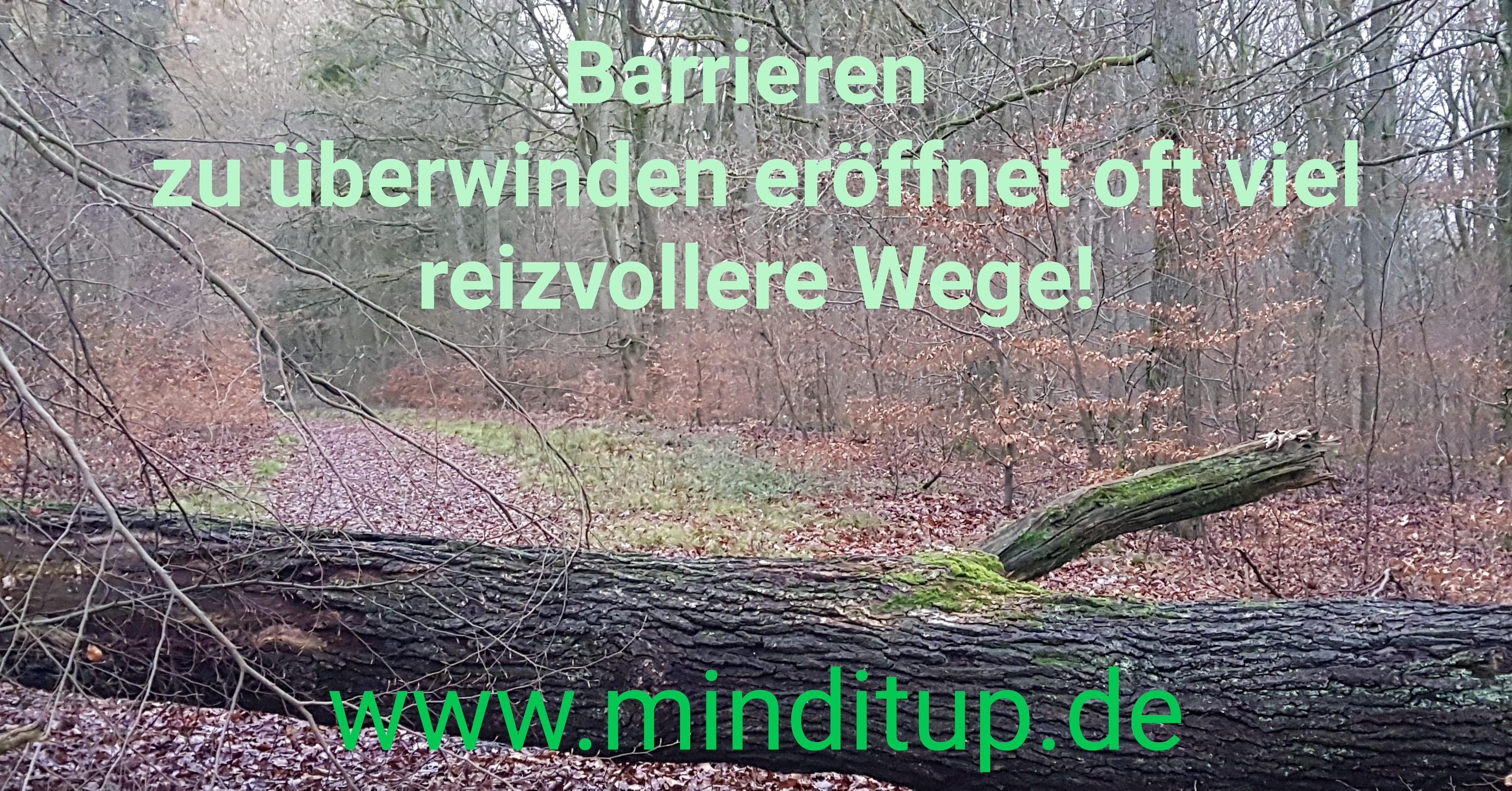 www.minditup.de