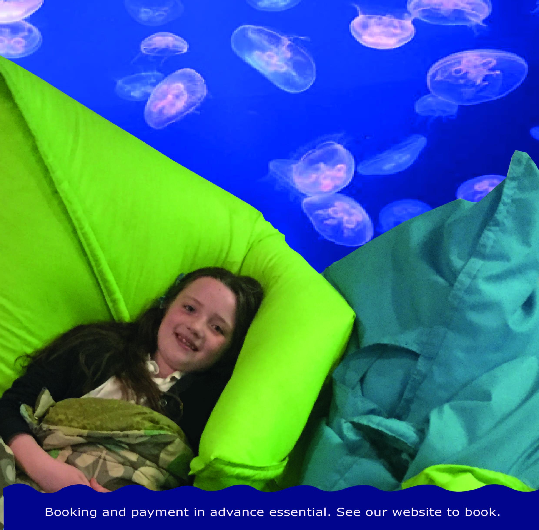 The Big Aquarium Sleepover - 20th Oct