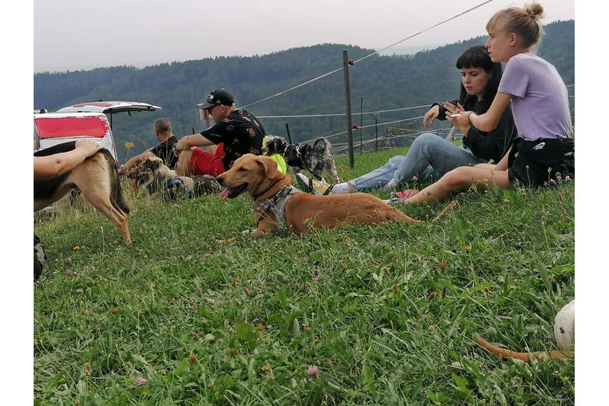 Tierheim Hund Cassie macht Pause