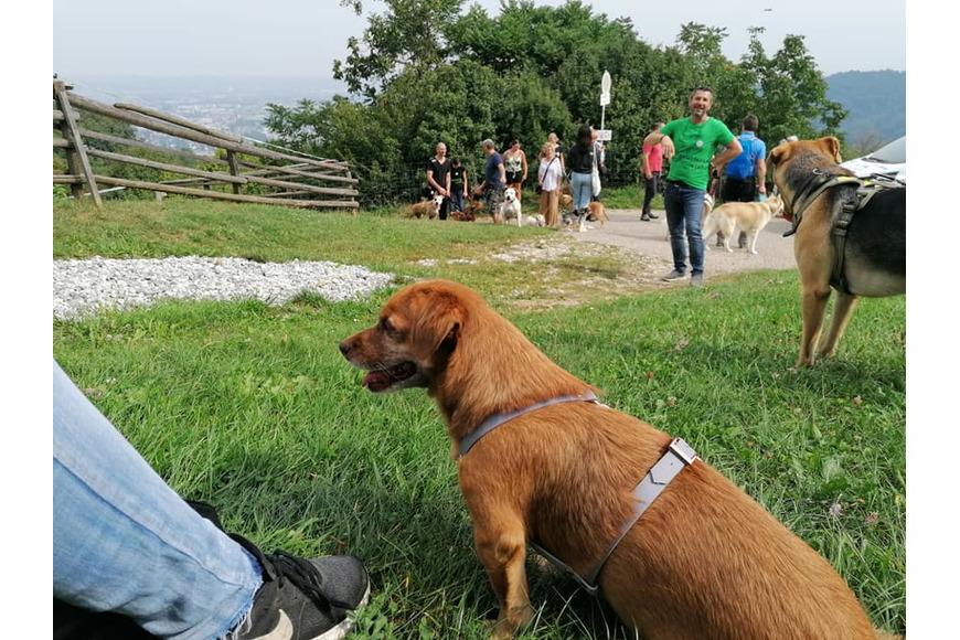Wandertag mit Tierheimhunden