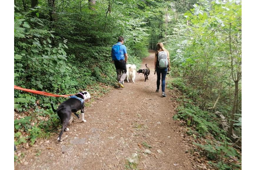 Waldwanderung mit Hunden