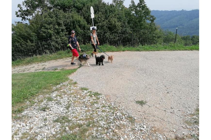 Kleine Hunde wandern