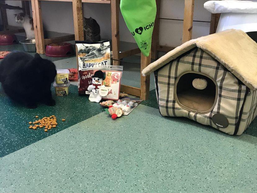 Weihnachten im Katzenzimmer, Christkindaktion