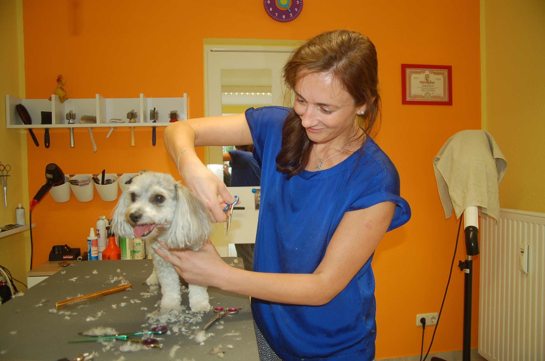 Hundestylist Tatiana Ziborich bei der Arbeit,