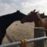 Esco lernt seinen Paddock-Nachbarn kennen