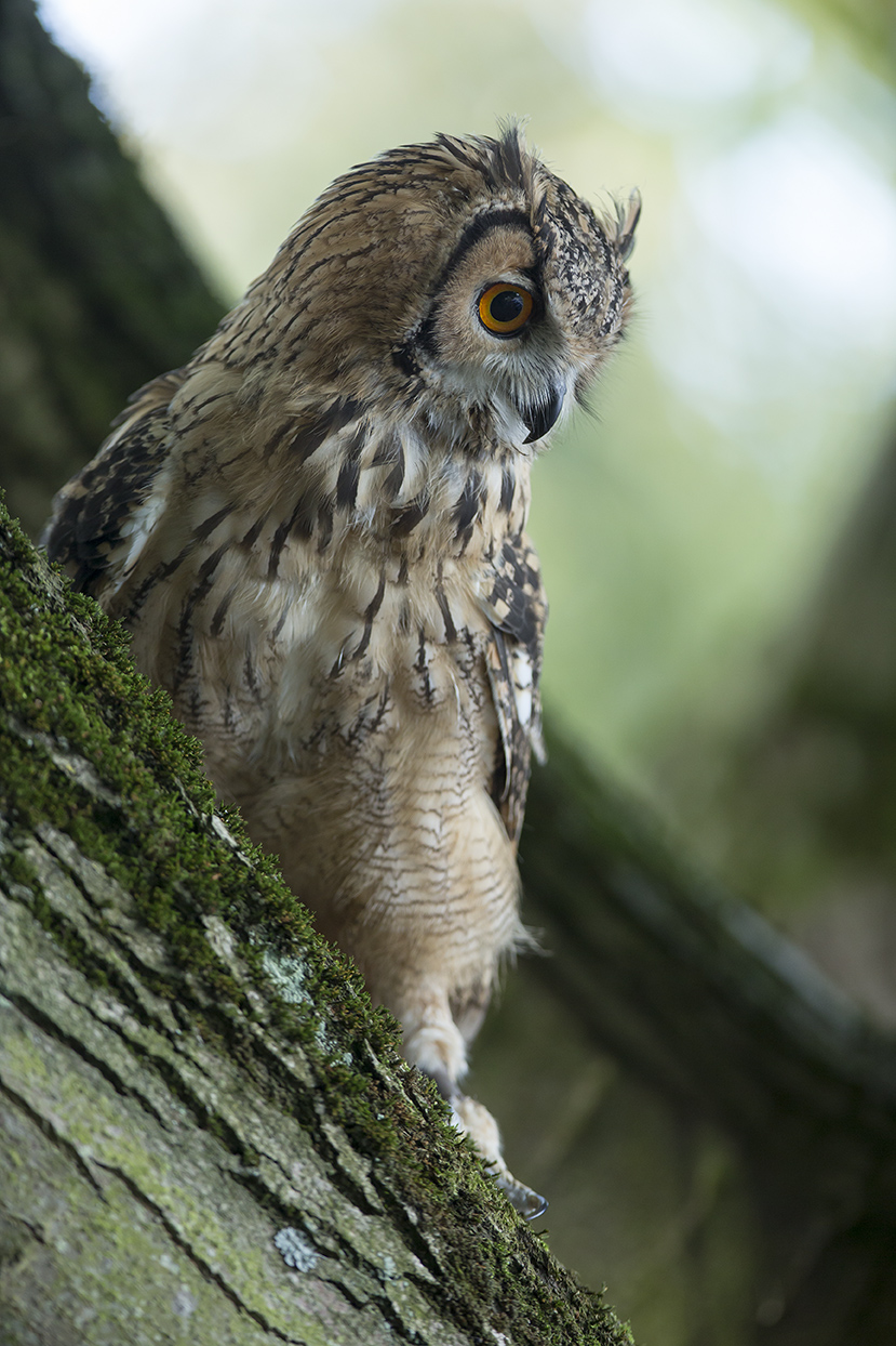OWL  SPONSOR