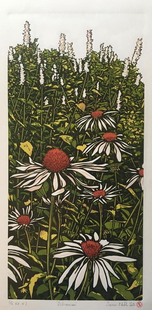 Echinacea (version 2)