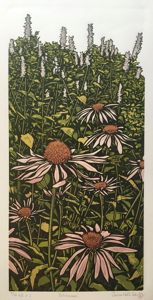 Echinacea (version 1)
