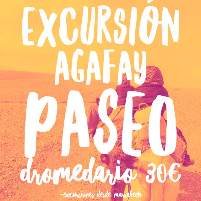 EXCURSIÓN DROMEDARIO AGAFAY