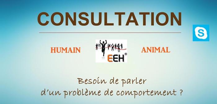 CONSULTATION / COACHING 1 heure à Brest