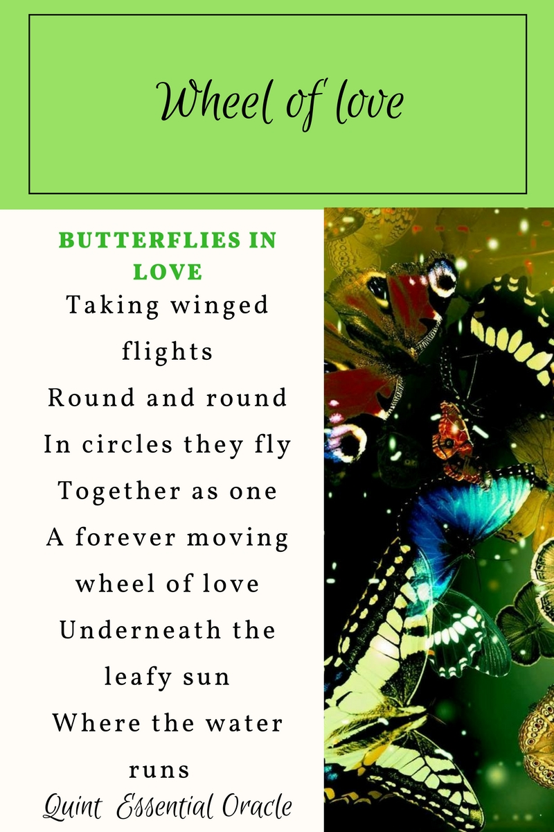 Taking winged flights Round and round In circles t